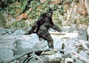 From Patterson-Gimlin Film, 1967