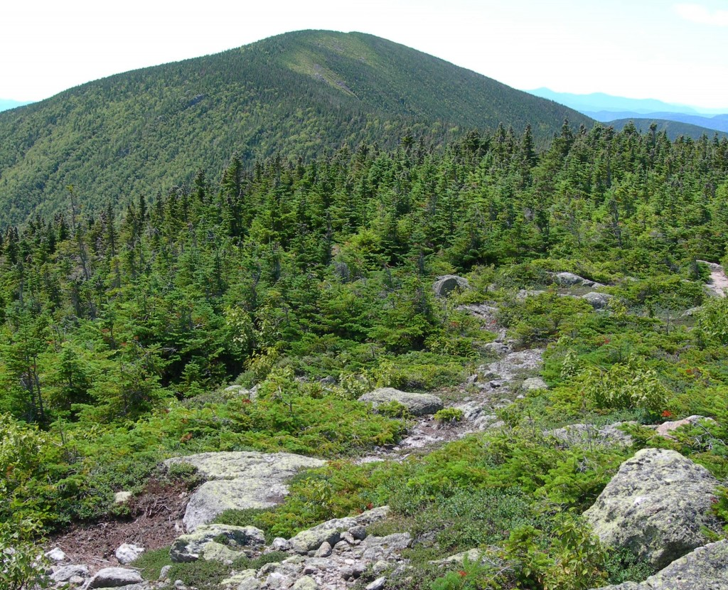 Carter Dome seen from Mount Hight.