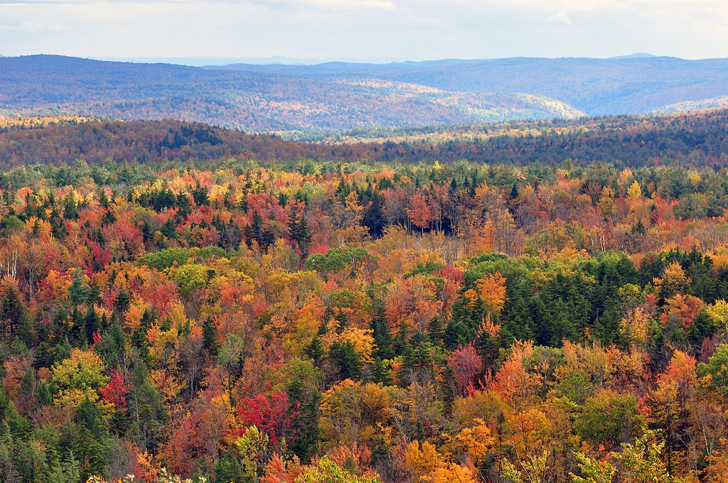 A Vermont forest comes alive with color in autumn. (Wikimedia Photo)