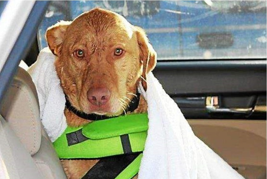 Ajax, the wet dog who helped rescue two kayakers. (Laura Foster Photo)
