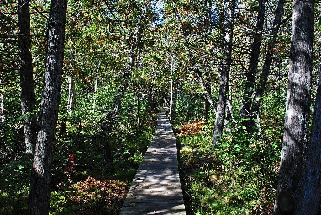 North Country Trail. (Wikimedia Photo)