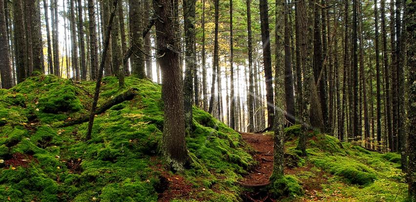The Cohos Trail, New Hampshire (Cohos Trail Association Photos)