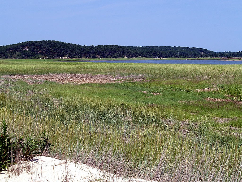 Great Island in Wellfleet. (Wikimedia Photo)