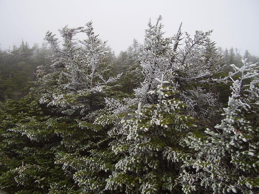 Long Trail Mt. Mansfield