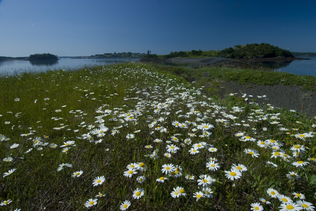 68 acres on Treat Island, Maine are preserved by the Maine Coast Heritage Trust. (Maine Coast Heritage Trust Photo)